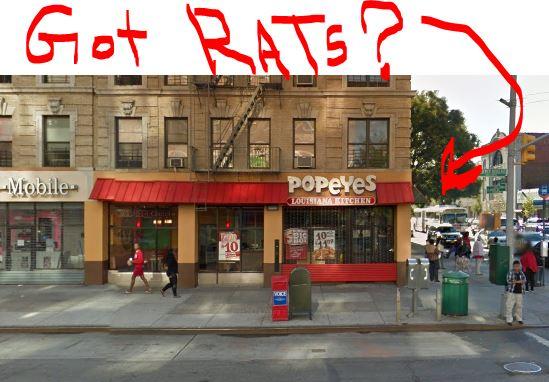 rats-popeye-ny